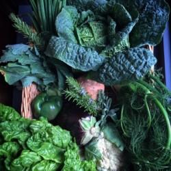 Organic Veggies OZCF